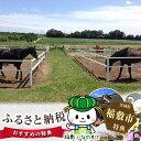 【ふるさと納税】初心者体験乗馬チャレンジ3回コース...