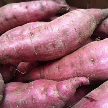 【ふるさと納税】【12ヵ月定期便】渋谷農園の毎月食べ比べさつまいも 4.5kg