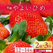 【ふるさと納税】【3ヶ月定期便】甘〜い!いちごやよいひめ12粒〜14粒入り2箱×3回