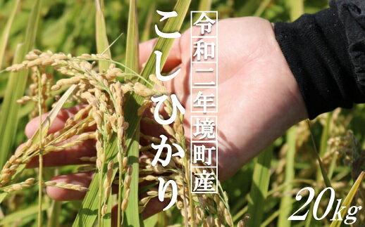 ⑤境町産コシヒカリ白米