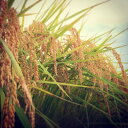 【ふるさと納税】米 栃木県産米3種食べくらべセット 各2kg精米