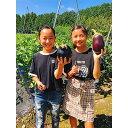 【ふるさと納税】ミナミ農園で農業(収穫)体験 チケット2枚【...