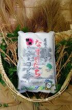 【ふるさと納税】ごはんソムリエが選んだお米2017年産栃木県北部産コシヒカリ1等米100%10kg