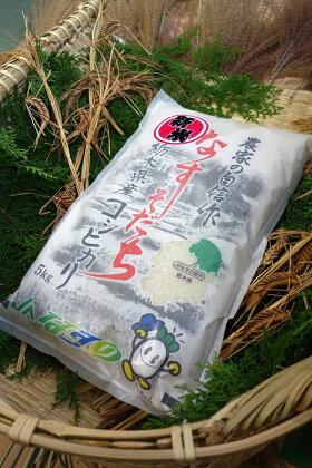 ごはんソムリエが選んだお米 2017年産 栃木県北部産コシヒカリ 1等米100% 5kg