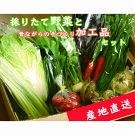 【産地直送】採りたて野菜と昔ながらの手づくり加工品セット