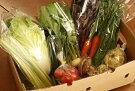 【産地直送】採りたて野菜セット