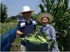 【ふるさと納税】B-43トウモロコシ苗オーナー(50本)