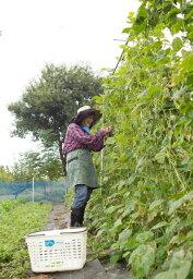 【ふるさと納税】H-08 栽培指導付き貸し農園