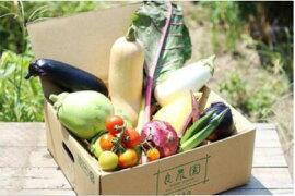 【ふるさと納税】D-15採れたて!良農園のおいしい野菜の定期便【年6回:奇数月配送】