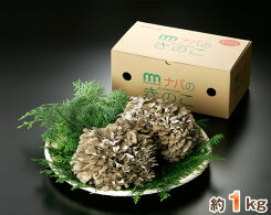 【ふるさと納税】No.001特選舞茸約1kg(箱入り)
