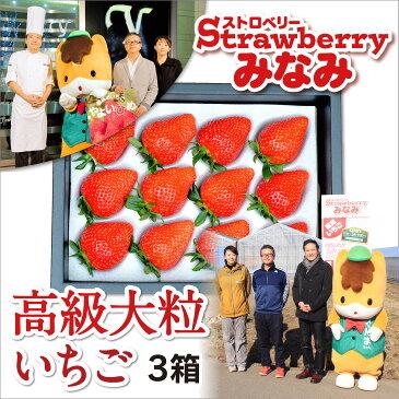 【ふるさと納税】パティシエ鎧塚利彦氏とコラボしたストロベリーみなみの「高級大粒いちご」3箱