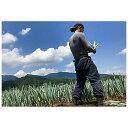 【ふるさと納税】【2630-0030】【限定50セット】伝統農法の下仁田葱(LL15本またはL20本)