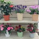 【ふるさと納税】J-1 季節の鉢花「おまかせセット」...