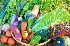 【ふるさと納税】No.029OGAWA'N農家のこだわり野菜セット約5kg