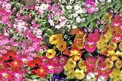 【ふるさと納税】[年3回定期便]季節の草花詰め合わせ[0134]