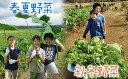 【ふるさと納税】「カズサ愛彩ガーデンファーム」 お試し収穫体験