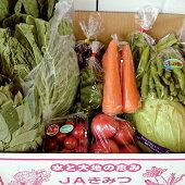 【ふるさと納税】◇旬の野菜詰め合わせBOX