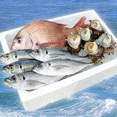 【朝獲れ直送!】天羽漁協旬の魚介3種セット