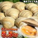 【ふるさと納税】ホンビノス貝 LLサイズ165g~ 計5.5