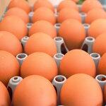 【ふるさと納税】今井の卵30個