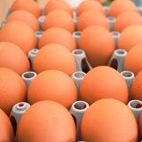 【ふるさと納税】《定期便》 今井の卵 30個 《12ヵ月毎月お届け》 薬品無添加 安心安全 餌と飼育環境こだわりの赤卵 産地直送 産みたて玉子 新鮮卵 卵かけご飯 玉子焼き 『甘さとコクが自慢』