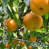 【ふるさと納税】 梨 千葉 8月 豊水 5kg 14個 3L 送料無料