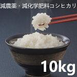 【ふるさと納税】A636いすみのエコ米コシヒカリ白米10kg(令和元年産)