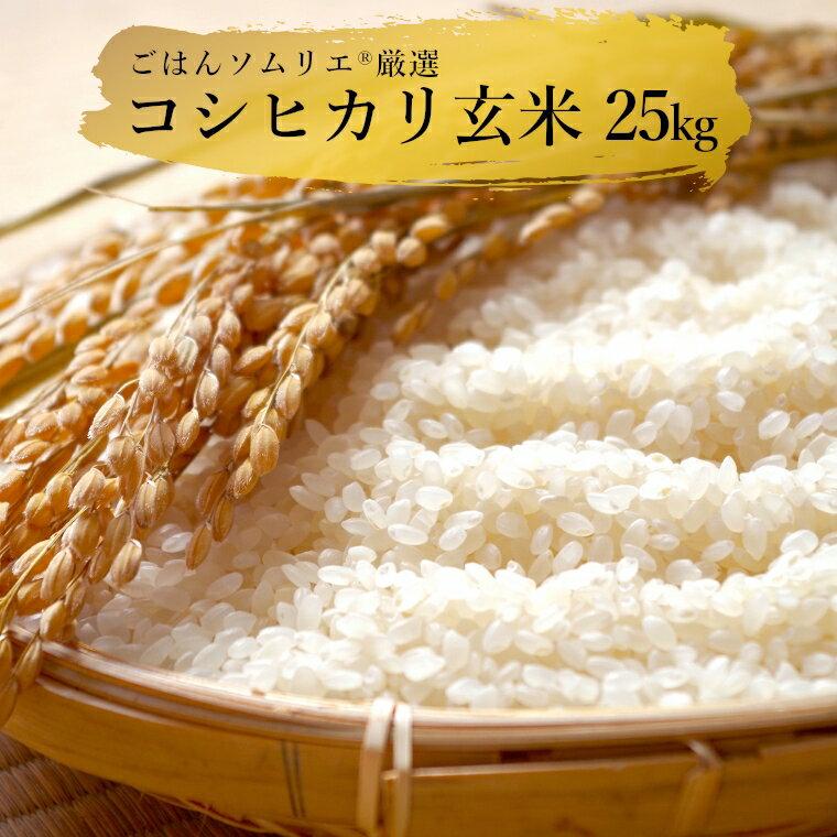 【ふるさと納税】 米 25kg 玄米 送料無料 コシヒカリ こしひかり 白米 25キロ ごはんソムリエ厳選 真空米びつ付