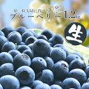 【ふるさと納税】 ブルーベリー 生 1.2kg 200g×6パック 送料無料 完熟 手摘み ちばエコ農産物