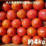 【ふるさと納税】A108ごじゃ箱の樹で熟した絶品トマト
