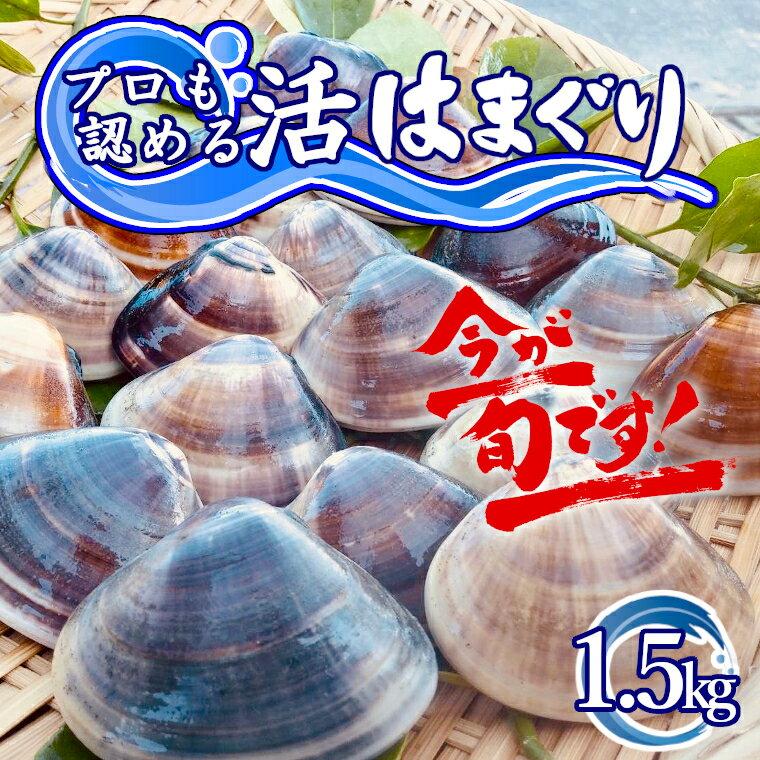 訳あり はまぐり ハマグリ 蛤 国産 天然 送料無料 1kg超 1.5kg 千葉県産 九十九里産