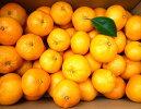 【ふるさと納税】あきさわ園の土蔵熟成蔵熟『蜜柑』みかん10kg箱。300年以上前から代々続く、個性豊かな蜜柑(みかん)