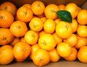 【ふるさと納税】あきさわ園の 土蔵熟成 蔵熟『蜜柑』みかん10kg
