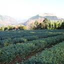 【ふるさと納税】足柄茶体験型ファームのオーナー権(1年間) 1名様分【1058915】