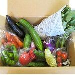 【ふるさと納税】【愛川ブランド】自然農法の「季節のおまかせ野菜セット」【1004445】