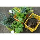 【ふるさと納税】[A13]「きときとファーム」野菜収穫体験チケット(1枚で5人まで)