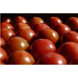 【ふるさと納税】フルーツトマト(深層水トマト)6kg(約3kg×2回) 画像2