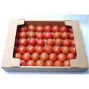【ふるさと納税】フルーツトマト(深層水トマト)6kg(約3kg×2回)