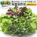 【ふるさと納税】富山のおいしい水で生産した無農薬野菜(6袋)...
