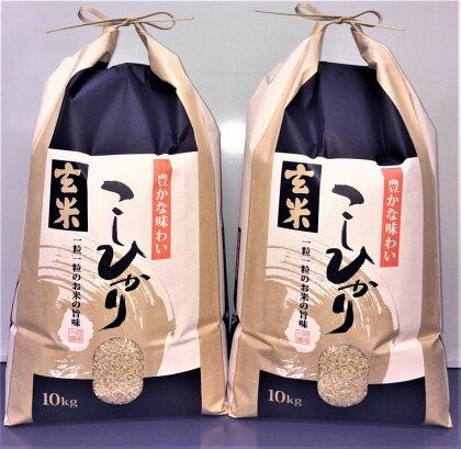 平成29年産 石川県能登産こしひかり玄米20kg(10kg×2袋)/日本初認定!世界農業遺産「能登の里山里海」の恵み