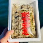 【ふるさと納税】石川県能登かきむき身900g〜1kg(箱入り)