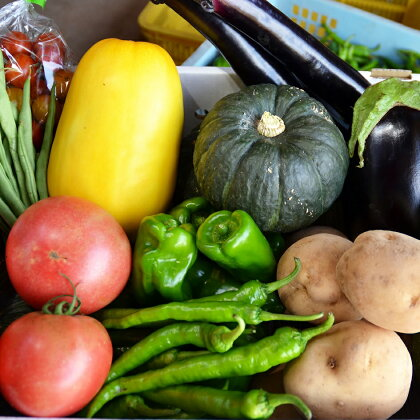 農家さんの夏野菜セット