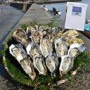 【ふるさと納税】能登穴水の牡蠣(殻付)加熱用3kg