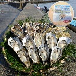 能登穴水の牡蠣(ムキ身)