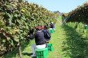 【ふるさと納税】能登ワイン ぶどうの木オーナー