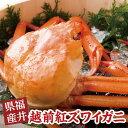 【ふるさと納税】数量限定!福井県産 越前紅ズワイガニ 【蟹・...