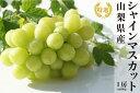 【ふるさと納税】日本一の葡萄の里・山梨県産 特選 シャインマ