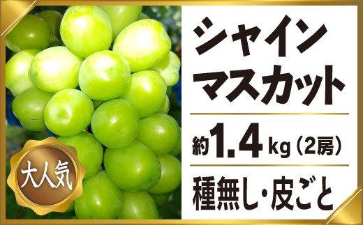 シャインマスカット 約1.4kg 2房 産地直送 完熟 フルーツ ぶどう