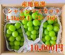 【ふるさと納税】産地厳選! シャインマスカット 1.3kg以上 (2〜3房)山梨 シャインマスカット