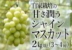 C-401.自家栽培の甘さ潤うシャインマスカット2.0kg(3-4房)(HO)